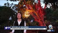 New 'Gardens Of Lights' event hits Mounts Botanical Garden
