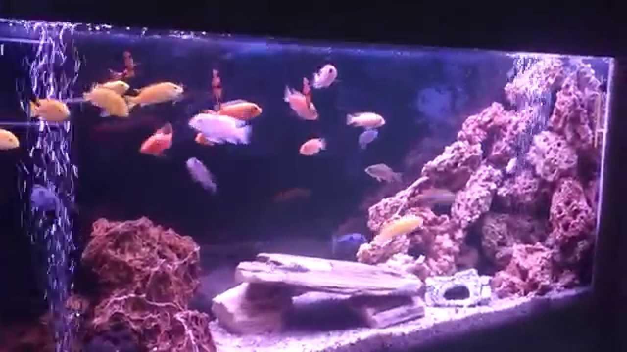 Akwarium W Scianie Pyszczaki Oswietlenie Led Youtube