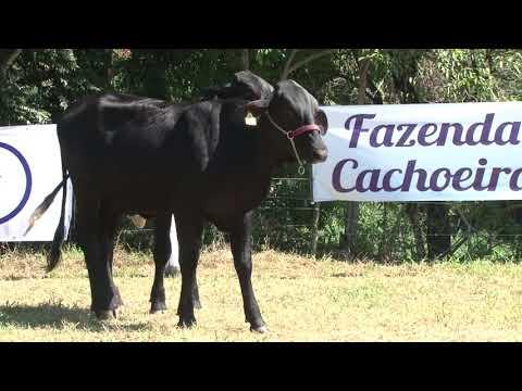 LOTE 23   FAZENDA CACHOEIRA