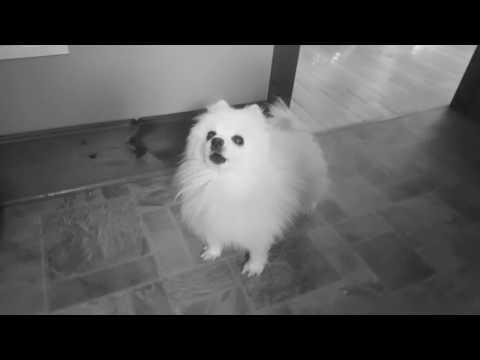 Thomas Ring - Vesterbro ft. Gabe the Dog