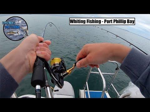 Whiting Fishing - Port Phillip Bay