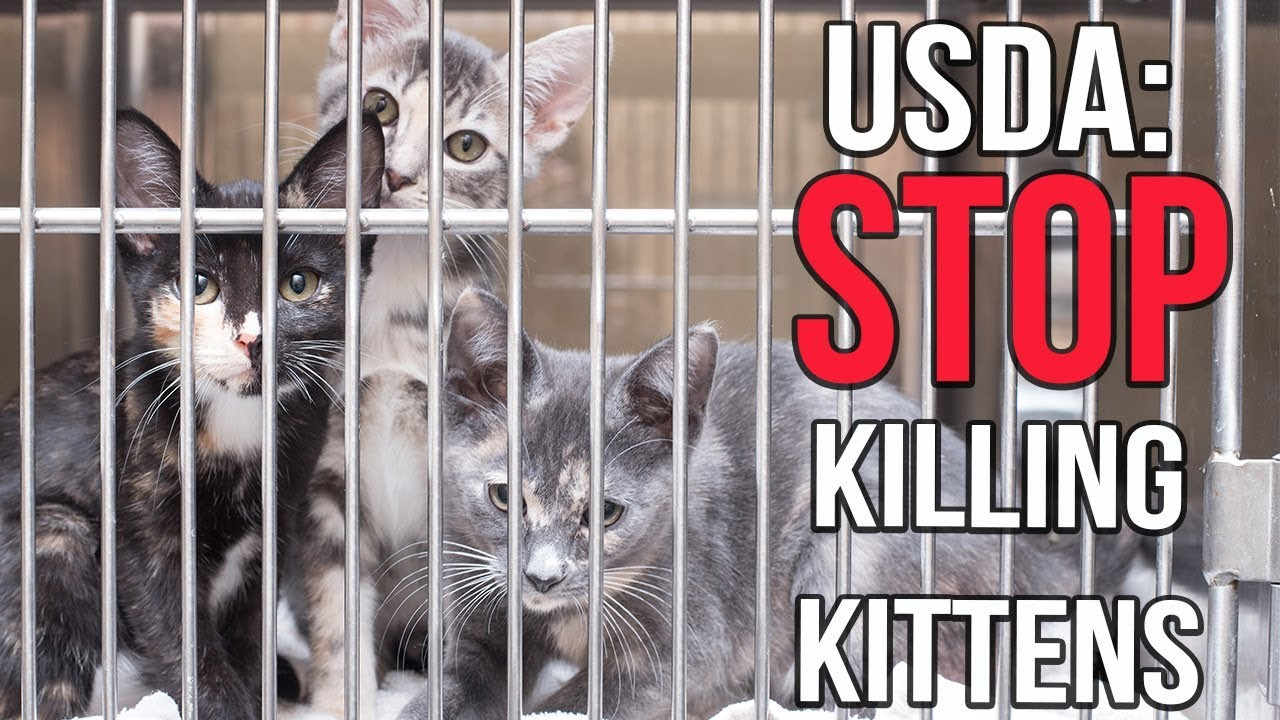 tell-the-usda-to-stop-killing-kittens