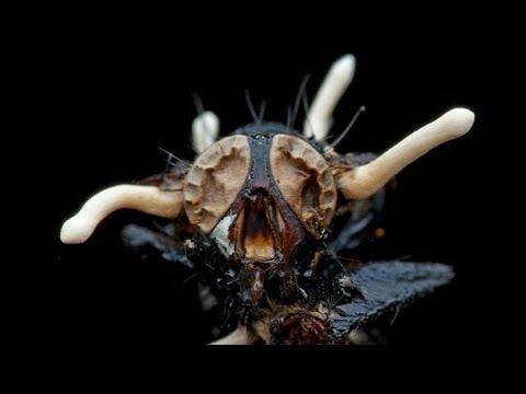 8 Жутких паразитов, превращающих своих хозяев в зомби!