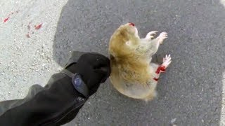 BIKER TRYING TO HELP DYING ANIMAL | BIKERS ARE NICE | Bikers Helping People & Animals | [Ep.#17] thumbnail