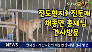진도현지) 한국진도개관리협회 채종안 총재님 견사방문