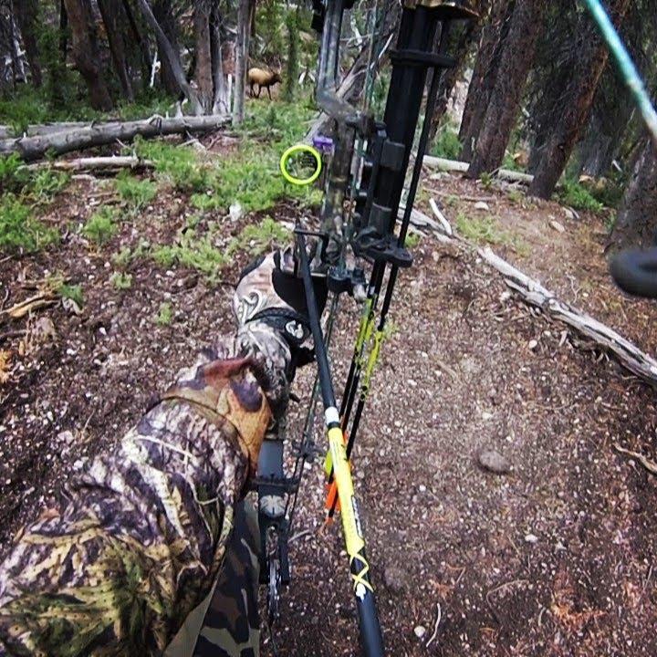 Archery hunting