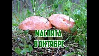 Грибы в октябре / Где искать маслята / Самые вкусные грибы
