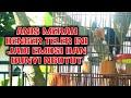 Anis Merah Teler Lagunya Bikin Emosi Anis Lain Langsung Ngikut Bunyi  Mp3 - Mp4 Download