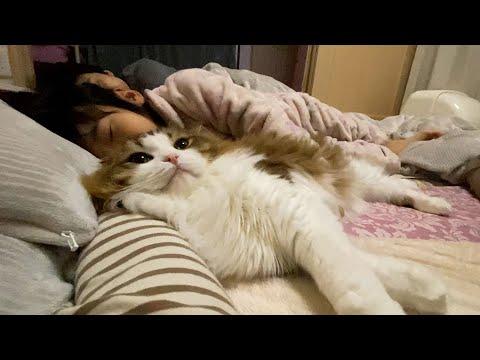 朝起きたら猫が隣で寝ていて娘がとても幸せそうだった