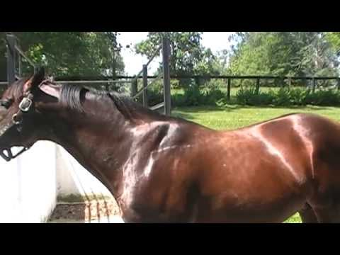 Tour Of The Claiborne Farm In Paris KY & Grave Of The Great Secretariat