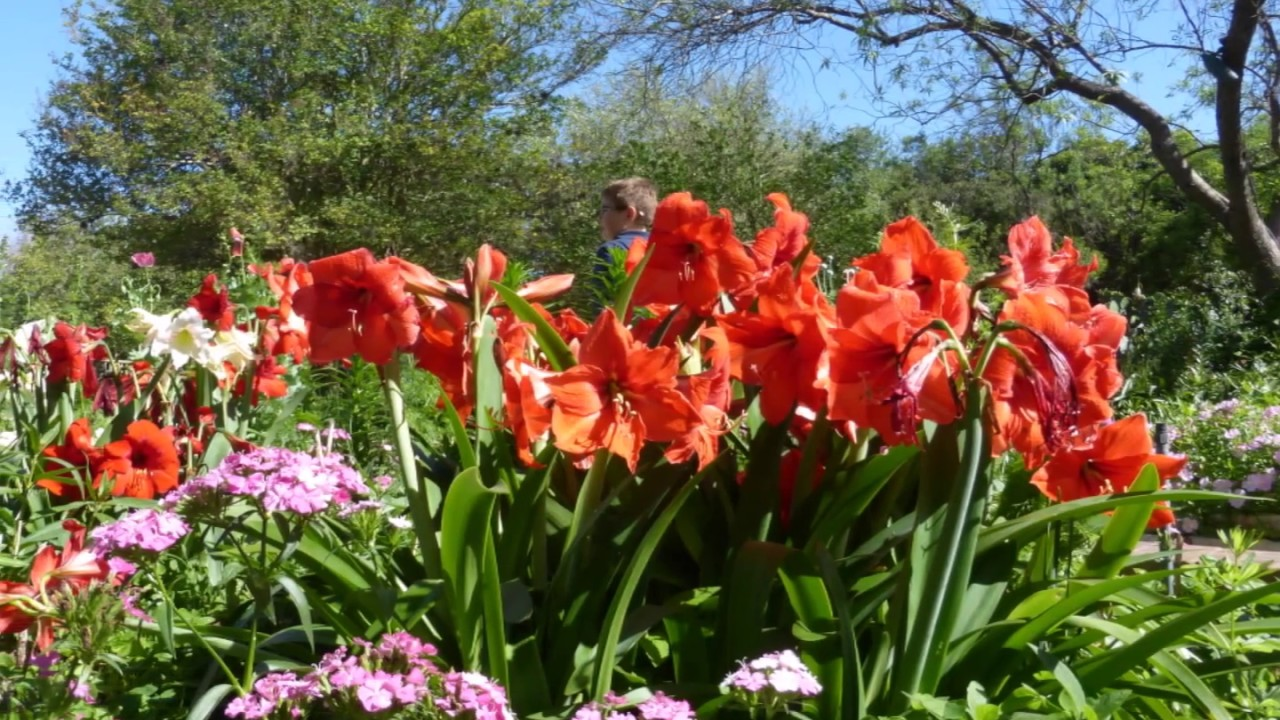 Images From The San Antonio Botanical Garden Fri 33117 Youtube