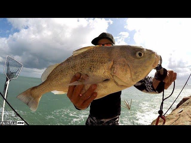 HUGE Grunter Off The Rocks! Fishing Cairns