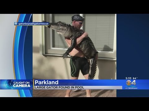 Eric Hunter - Gator Rescued From Pool In Parkland