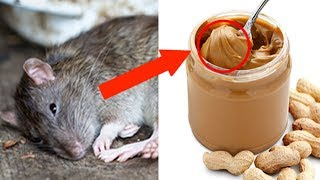 The Weirdest Things the FDA Allows in Our Food!