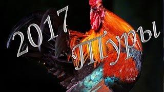 видео Новогодние туры в Карелию на 2018 год по низкой цене