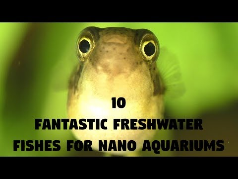 10 Fantastic Freshwater Fishes For Nano Aquariums | Animals Unlimited | Sameer Gudhate