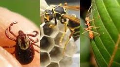 Pest Control Little Elm TX 75068 Rodent Control