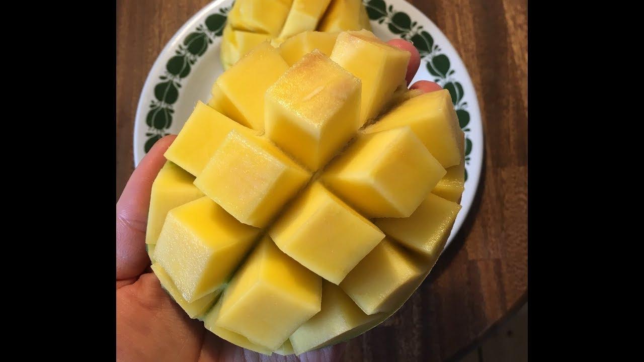 Come Piantare Il Mango come coltivare il mango