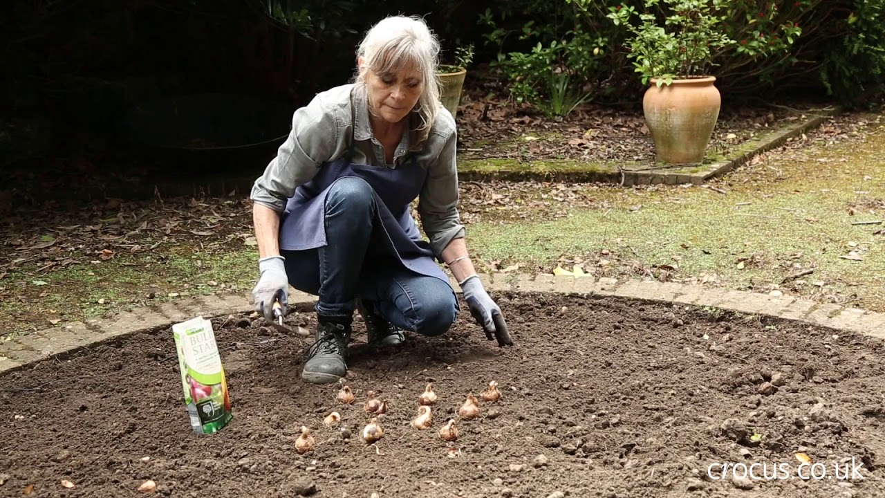 How to Bulb planting YouTube