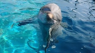 Dolphin Love-Carly Rae Jepsen Call Me Maybe parody.mpg