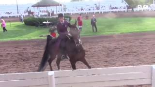 Horse runs away at show, what happens next will make your day. Turn up volume