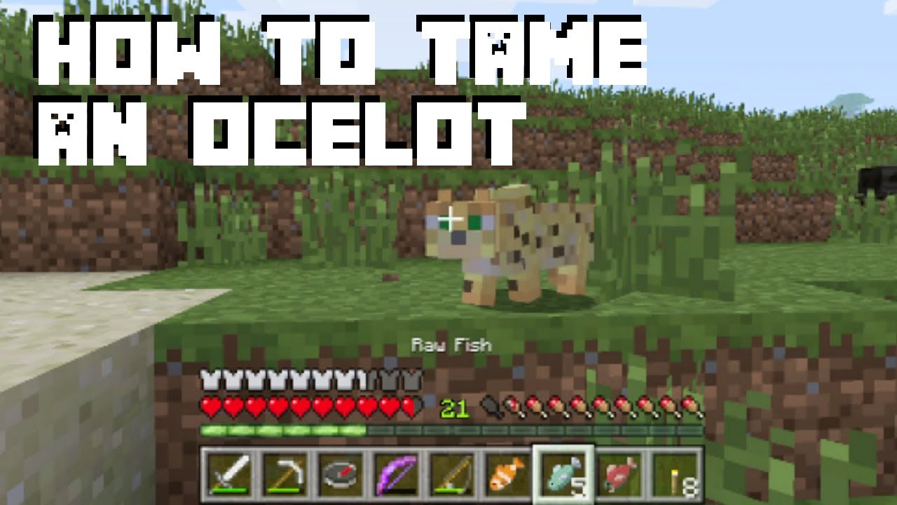 How to Tame an Ocelot - Minecraft 101 (How to Get a Cat in Minecraft)