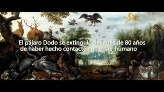 Fuana Perdida - El Pájaro Dodo (Episodio 1)