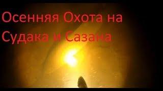МНОГО РЫБЫ!Осенняя Подводная Охота на Сазана и Судака!