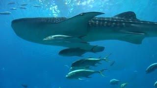 世界最大の水族館(2の2)/The Largest Aquarium in the World (2 of 2)