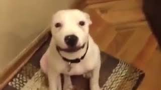 Animal lovely funny clip