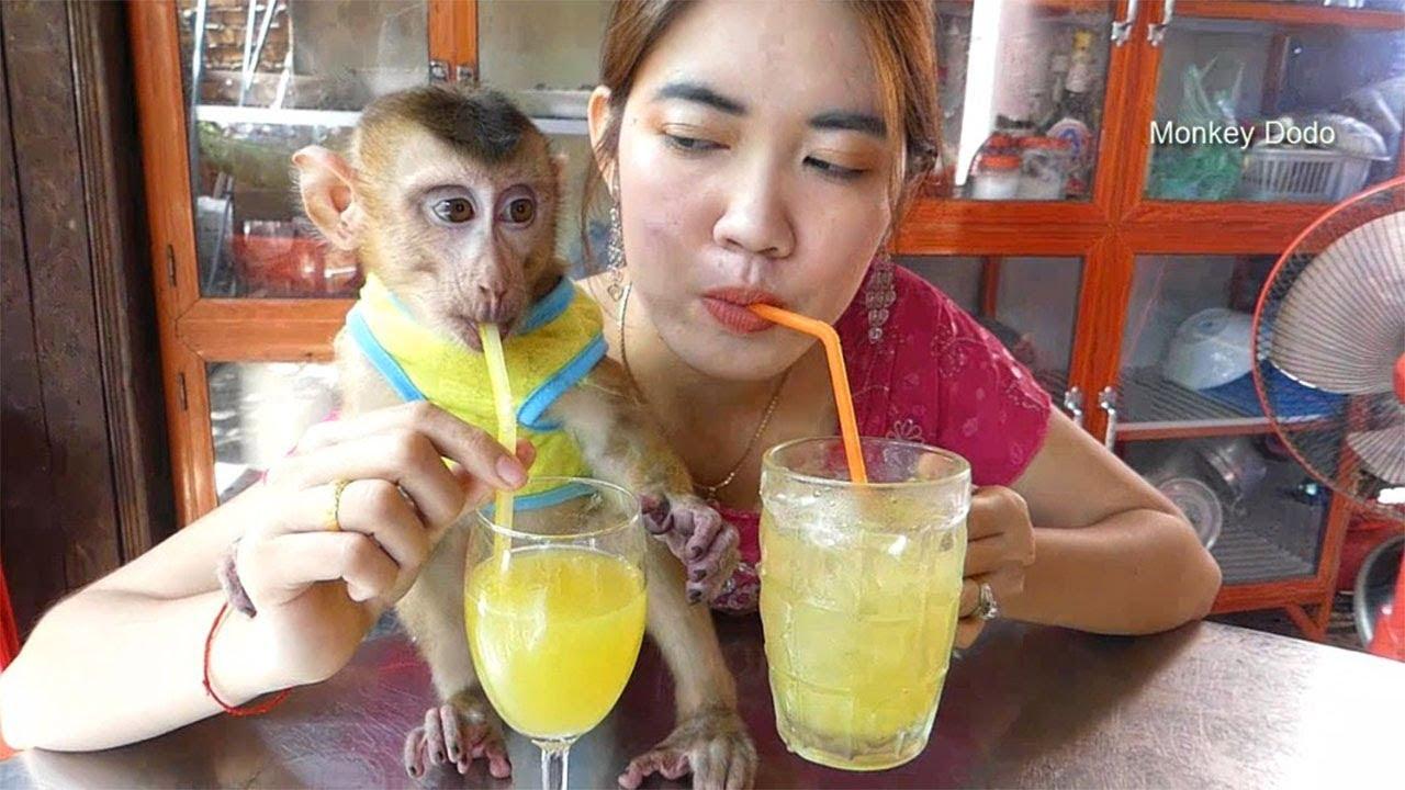 Monkey Dodo!! Wow Dodo Has Tasty Juice With Mom, Dodo Like So Much