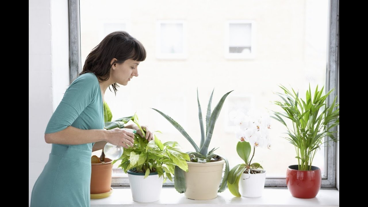 HOW TO CARE OF INDOOR PLANTS - YouTube Caring House Plants on tall slim plants, talking plants, positive energy plants, respecting plants, sharing plants, awesome plants, most important plants, detailed plants, creative plants, england plants, strong plants, balanced plants, resilient plants, learning plants, meaningful plants, peaceful plants, tough plants, protecting plants, friendly plants, loving plants,