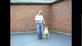 Kentuckiana K-9 Dog Basic Obedience Training Compilation Video