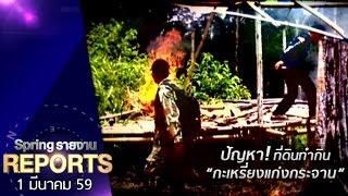 Spring Reports 1/3/59 : การค้นคำตอบ...ของกะเหรี่ยงแก่งกระจานกลางป่าทุ่งใหญ่