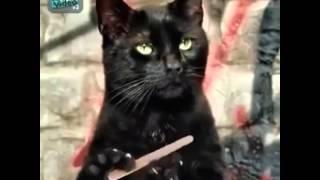 Черный кот и пилка для ногтей
