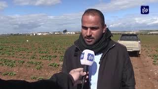 مزارعون يشكون من تضرر مزروعاتهم جراء الصقيع في إربد - (10/2/2020)