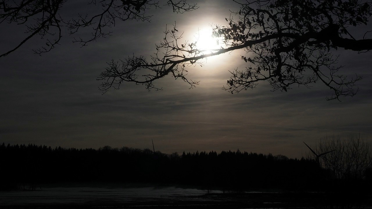 Noite no mato com coruja, grilos e sapos (1 hora de sons da natureza para dormir) - YouTube