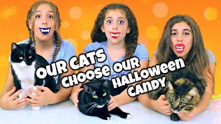Don't Choose The Wrong Halloween Candy Challenge with Our Cats!