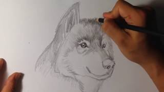 Drawing a Wolf - Draw Fantasy Art