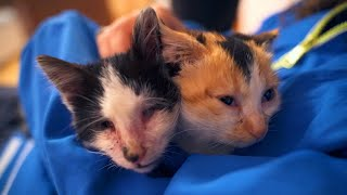 Abandoned Kitten Is Helping Her Blind Brother To Survive On The Streets | Episode 4