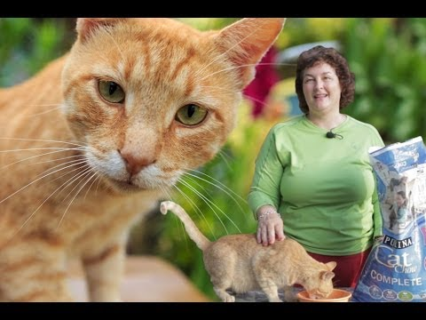 Deworming Cats Naturally: Prevent Roundworms & Tapeworms In Cats