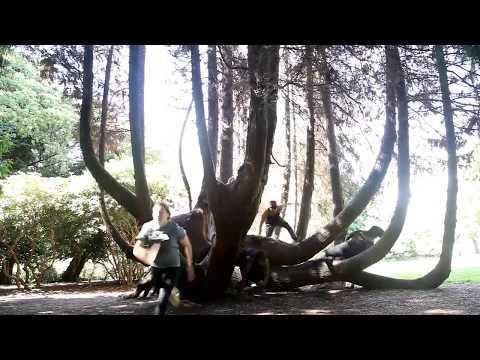Promo Journey Parkour Langley, Surrey, North Vancouver & Port Moody