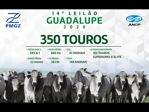 LOTE 19
