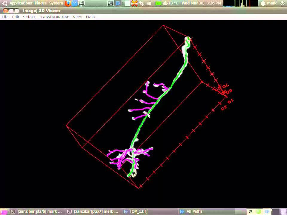 simple neurite tracer