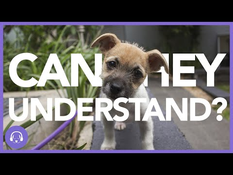 Can Dogs Understand Humans? | Dog Training