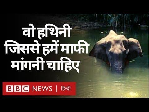 Pregnant Elephant की