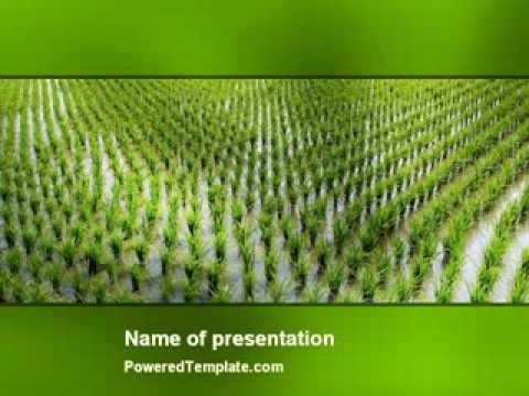 Rice paddies powerpoint template by poweredtemplate youtube toneelgroepblik Images