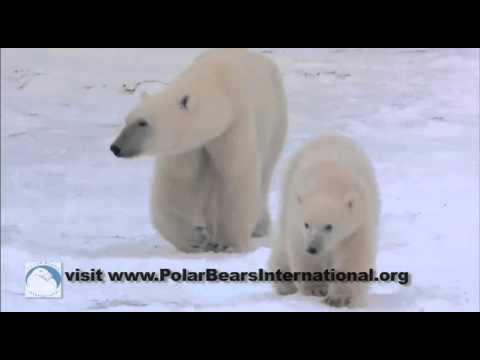 Josh Duhamel: You Can Help Polar Bears