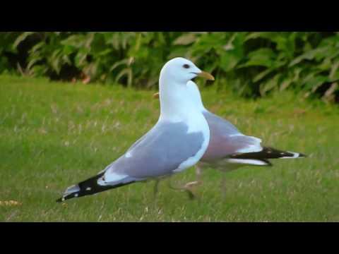 Electronic improvisation - Indian Seagull in Gotenburg sweden