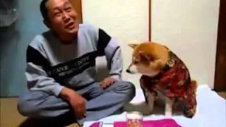 pas sprecava da covek pije